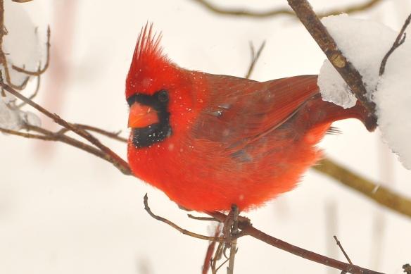Cardinal22Dec12#133E