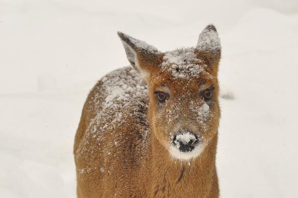 Deer31Dec12#043E2