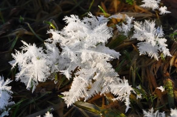 Frost2Feb13#127E