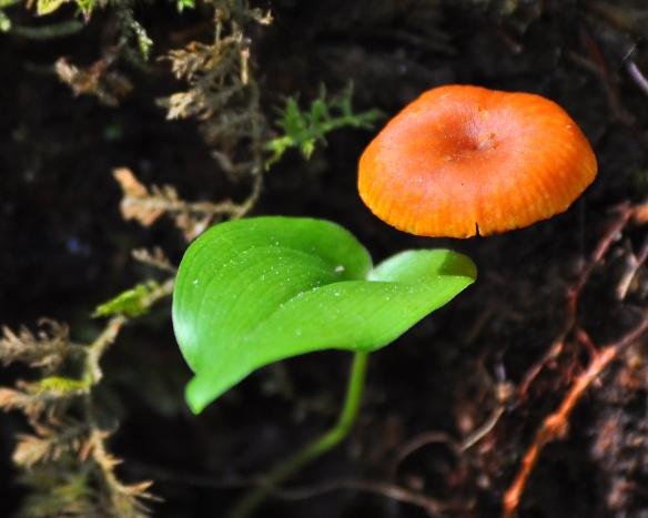 Mushroom19May13#056E