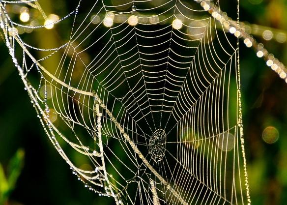 SpiderWeb27June13#026E3