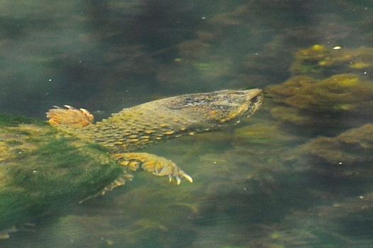 Turtle8June13#044E2