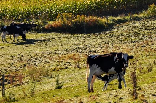 DairyFarm29Sept13#036E2