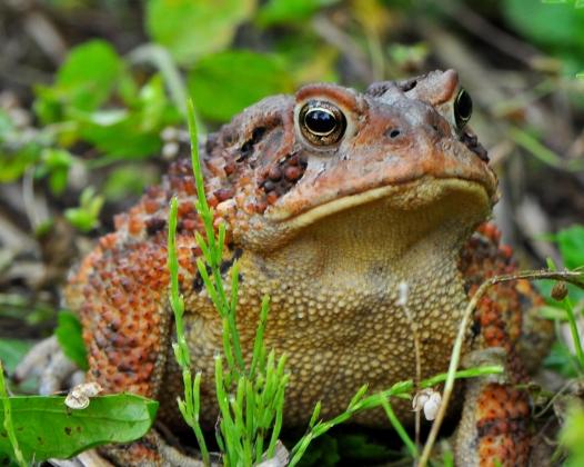 Toad15Aug13#023E2