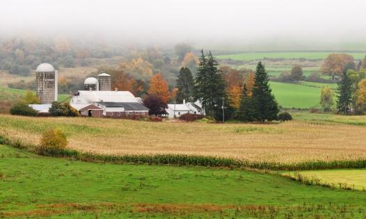 Farm5Oct13#027E