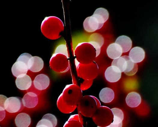 Winterberry1Nov13#060E2c8x10