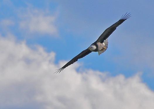 Eagle18Nov13#220E2c5x7ps