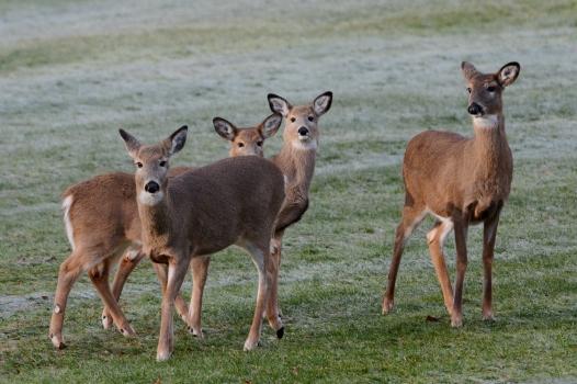 Deer15Jan14#010E