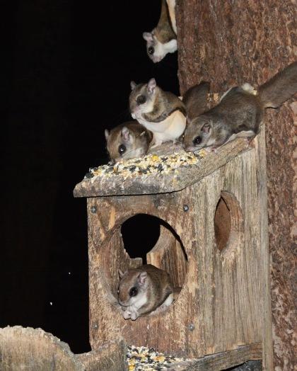 FlySquirrels11Mar14#072Ec8x10