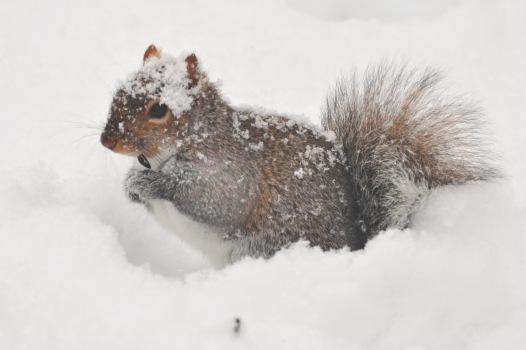 GraySquirrel9Mar12#1005E2