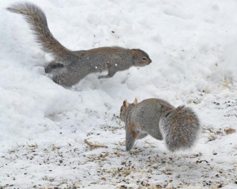 GraySquirrels22Mar14#016E2c8x10