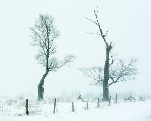 TreesWinter13Mar14#013E2c8x10