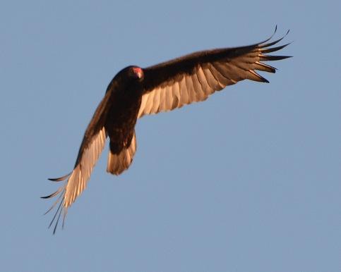 Vulture24Apr14#112E2c8x10
