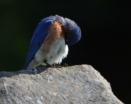 Bluebird20June14#068E3c8x10
