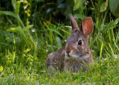 Bunny18June14#001Ec5x7