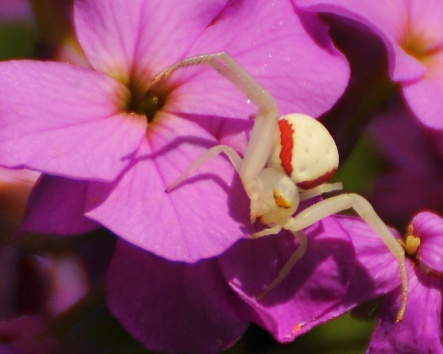 FlowerSpiderDRocket9June13#155E2c8x10