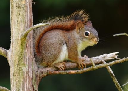 RedSquirrel19June14#010Ec5x7
