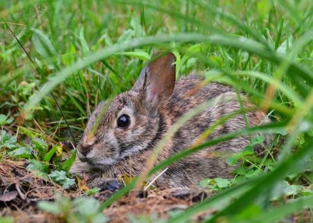 Bunny16July14#006Ec5x7