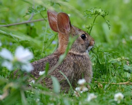 Bunny1July14#008Ec8x10