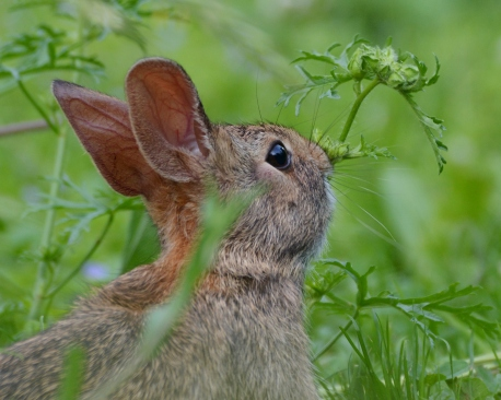 Bunny1July14#010Ec8x10