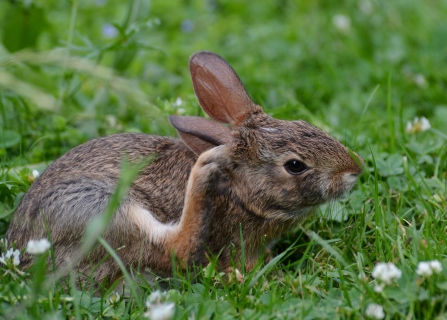 Bunny1July14#021Ec5x7