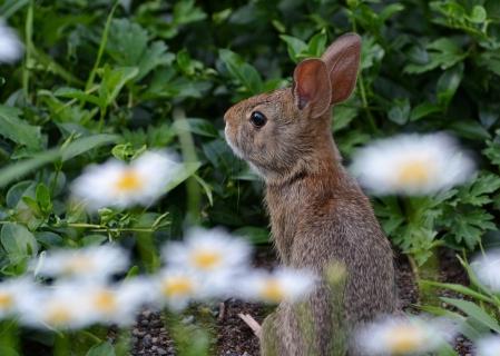 Bunny1July14#024Ec5x7