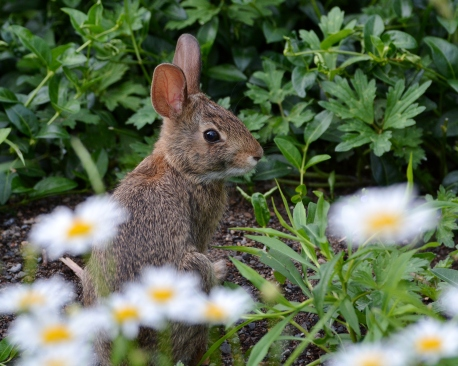 Bunny1July14#026E2c8x10