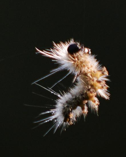 CaterpillarThread30July14#045E6c8x10