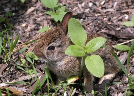 RabbitNest28June8Ec5x7