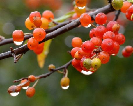 AutumnOlive16Sept14#028E2c8x10