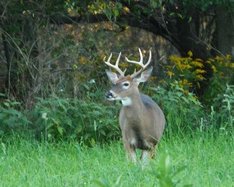 Buck14Sept14#046E3c8x10
