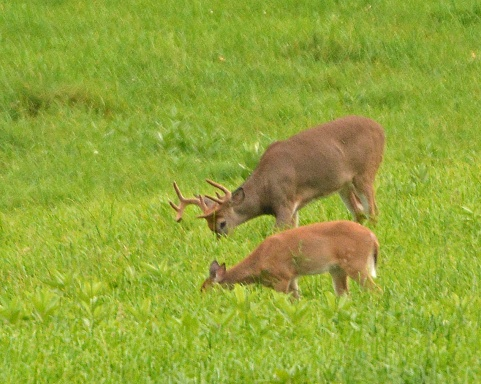 BuckDoe10Sept14#010E5c8x10