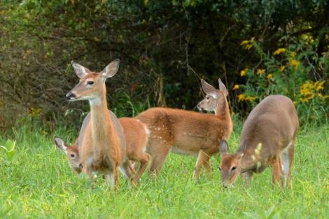 Deer13Sept14#022Ec4x6