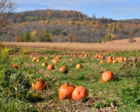 Pumpkins20Oct14#015Ec8x10