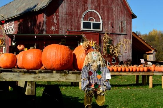 PumpkinStand24Oct14#044Ec4x6