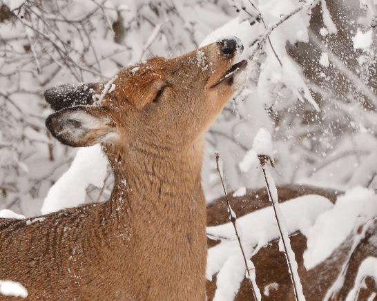Deer10Dec14#028E2c8x10