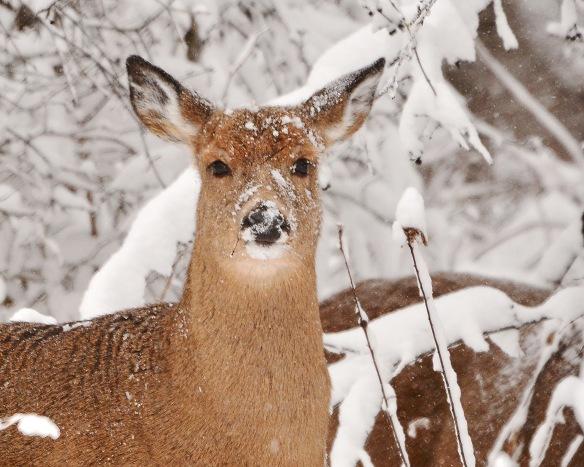 Deer10Dec14#029E2c8x10
