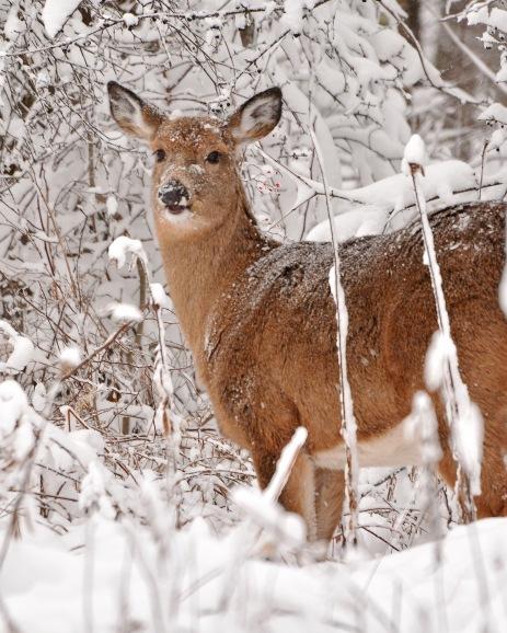Deer10Dec14#046E2c8x10