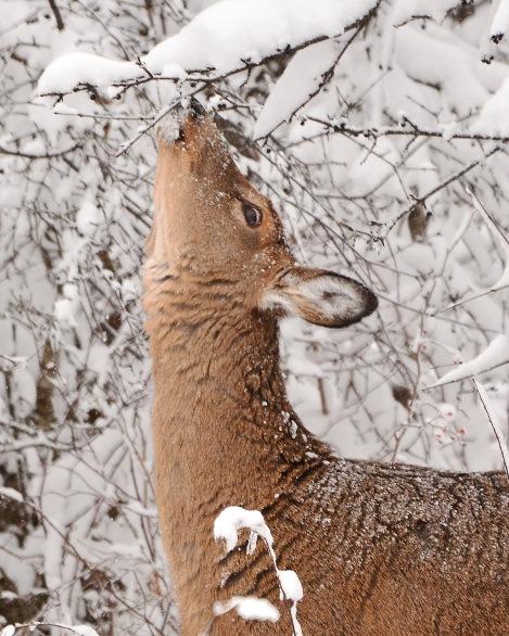 Deer10Dec14#061E2c8x10