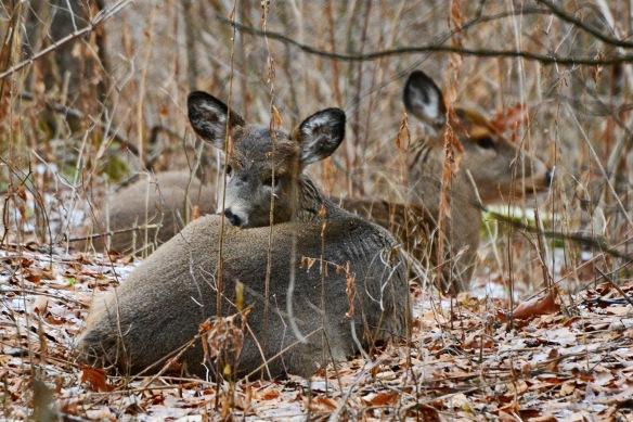 Deer8Dec14#022E2c4x6