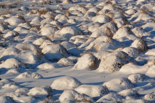 SnowyField8Jan15#033Ec4x6