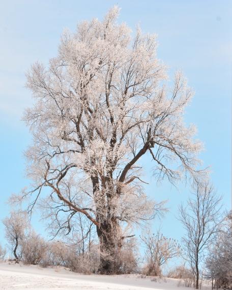 Tree21Jan15#059E3c8x10