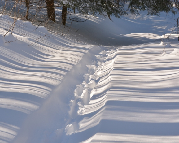 deerSnowshoeTracks16Feb15#070Ec8x10