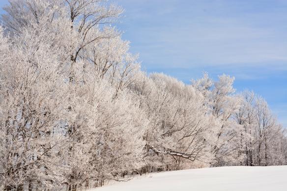 frostyTrees11Feb15#043Ec4x6