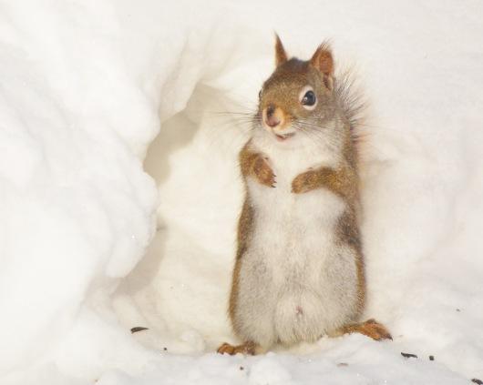 RedSquirrel18Feb15#050E3c8x10