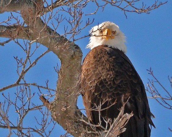 Eagles28Feb15#176E4c8x10