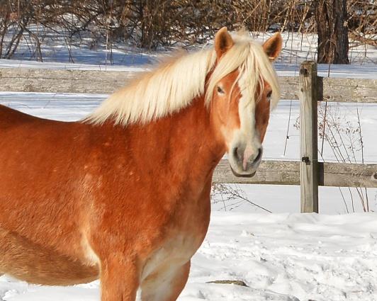 Horse19Mar15#014E2c8x10