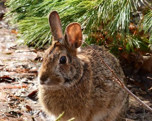Bunny11Apr15#001Ec8x10