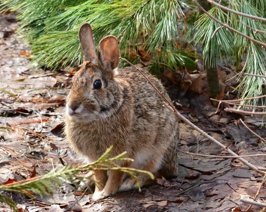 Bunny11Apr15#004Ec8x10