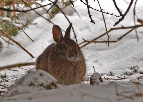 Bunny5Apr15#005E2c5x7